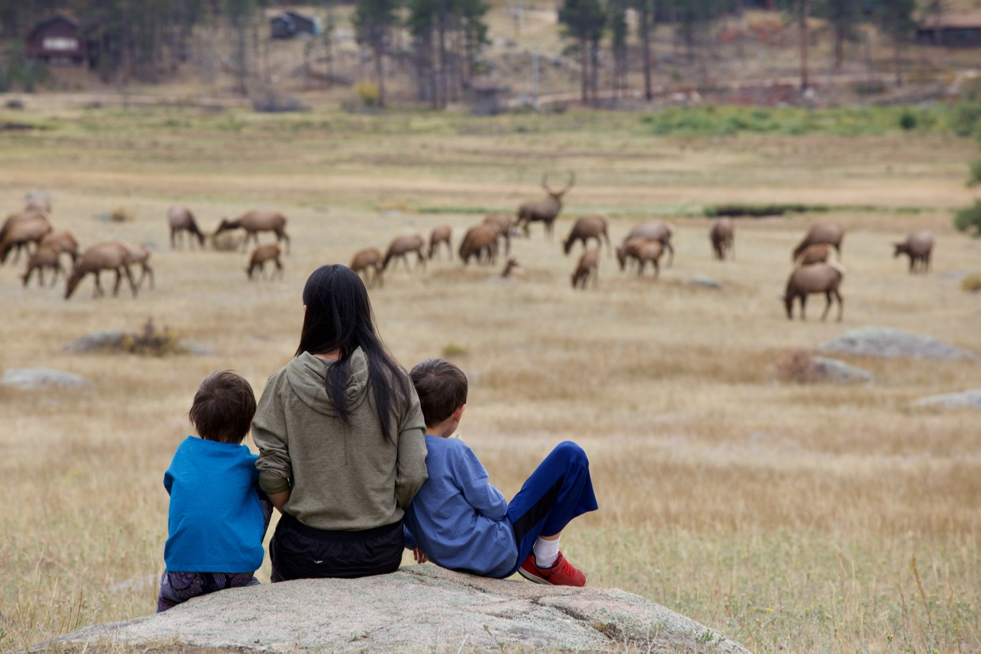 Watching Elk at Rocky Mountain Park