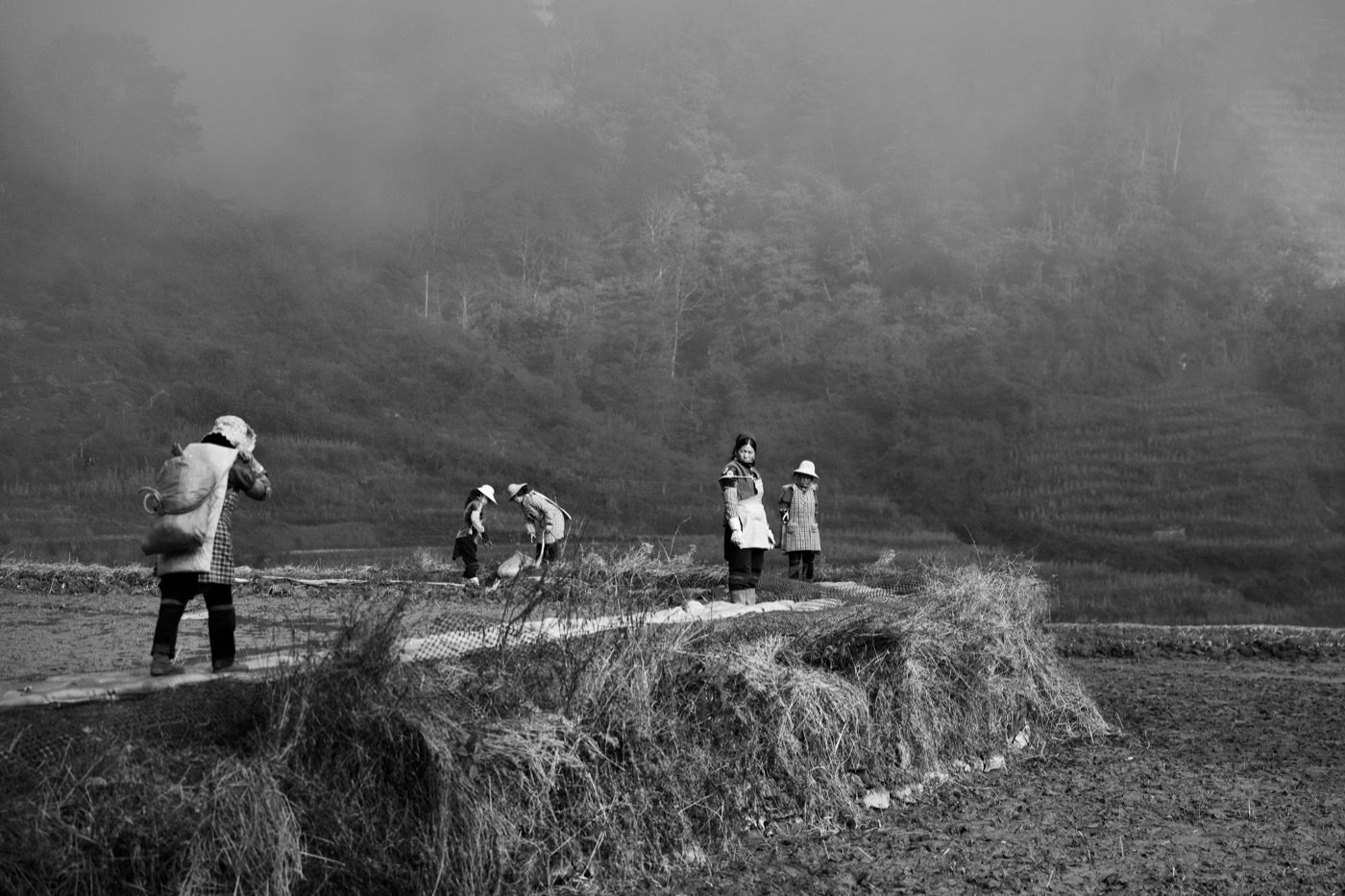 Women working the fields.  Laohuzui, Yunan, China