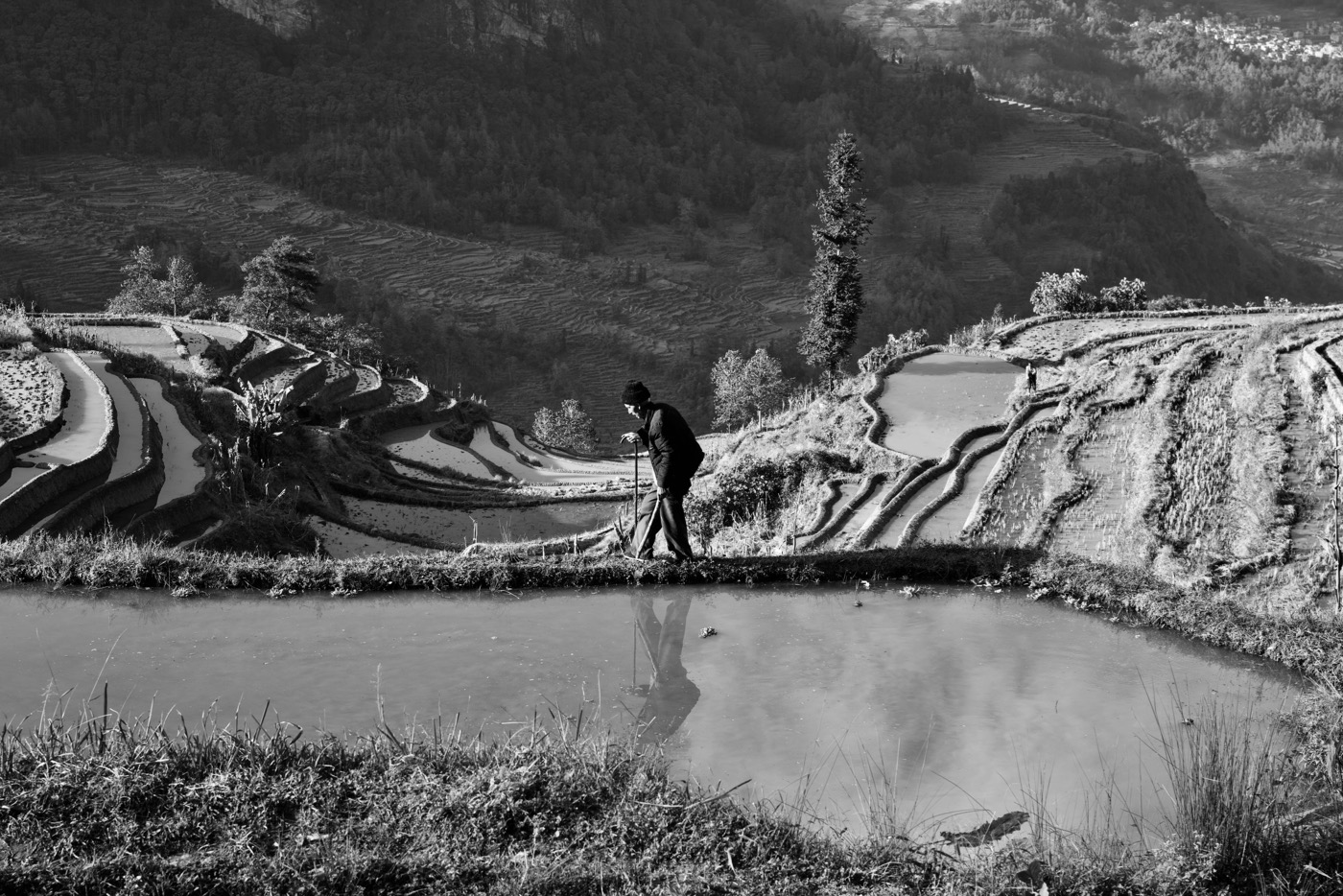 Farmer walking through rice paddies.  Laohuzui, Yunan, China