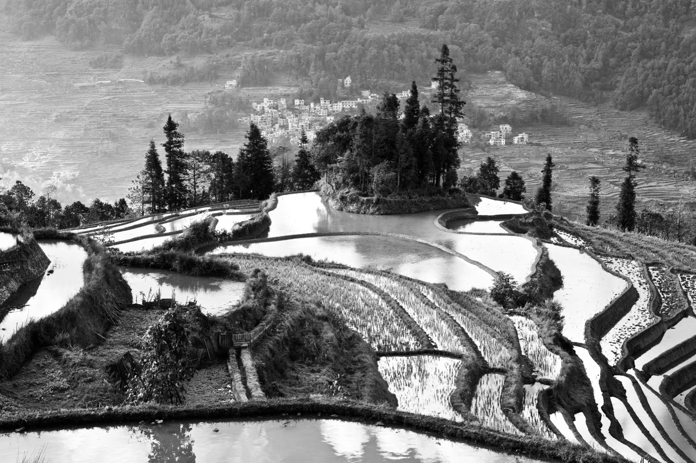 Rice paddies.  Laohuzui, Yunan, China