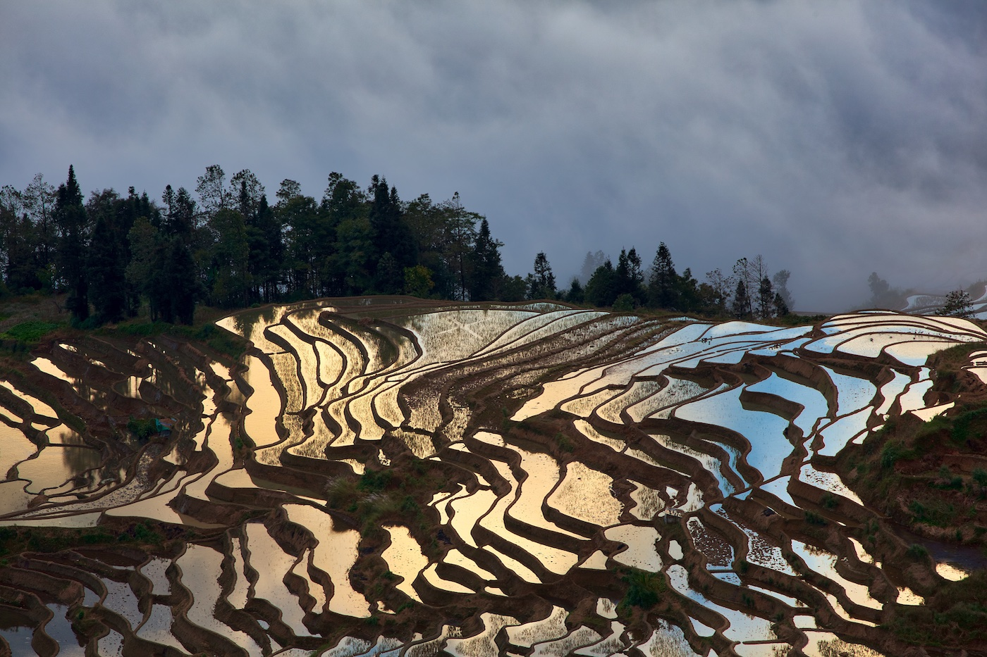 Rice paddies in early morning.  Duo Yi Shu, Yunan China.